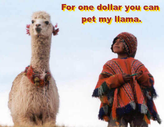 Photo: Peruvian child looking proudly at pet alpaca. Caption: For one dollar you can pet my llama.