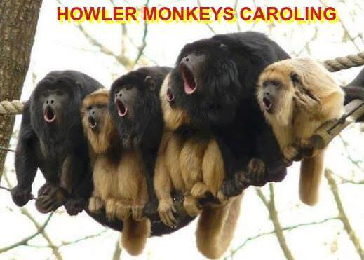 Clean Christmas Jokes: Photo of 6 howler monkeys sitting tightly together on a rope. Caption: HOWLER MONEYS CAROLING