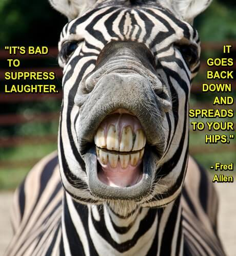 Photo of laughing zebra with caption: