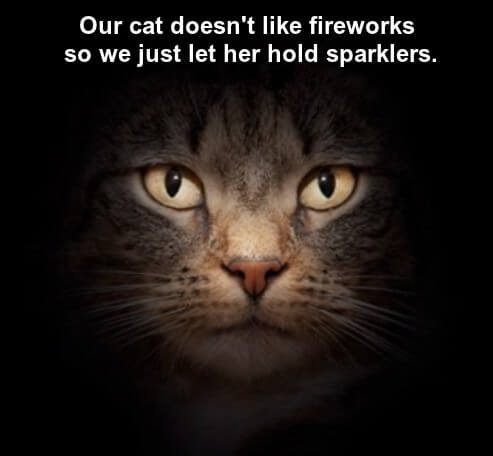Image: part of a cat face looking serious on a dark background.  Caption: our cat doesn't like fireworks so we just let her hold sparklers.