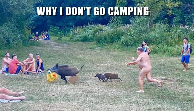 Photo of naked man chasing pigs in campground with caption: