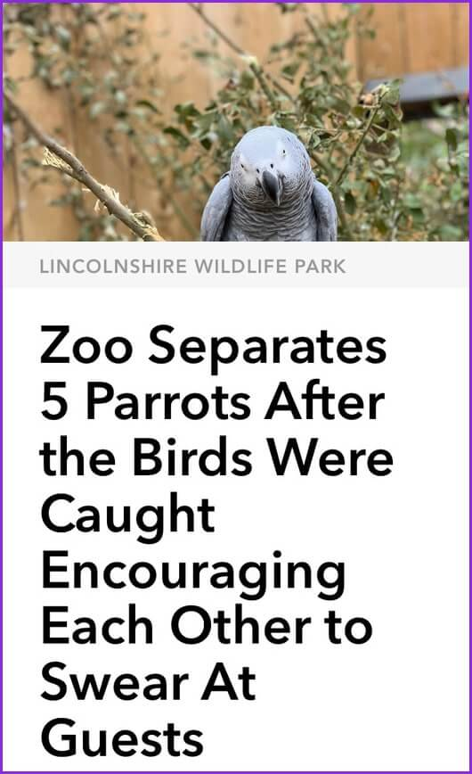 Funny Jokes: Photo of parrot over news headline that reads: